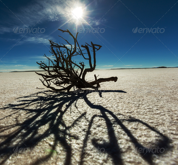 Salar de Uyuni - Stock Photo - Images