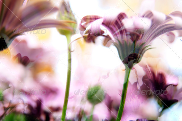 Flower Background - Stock Photo - Images