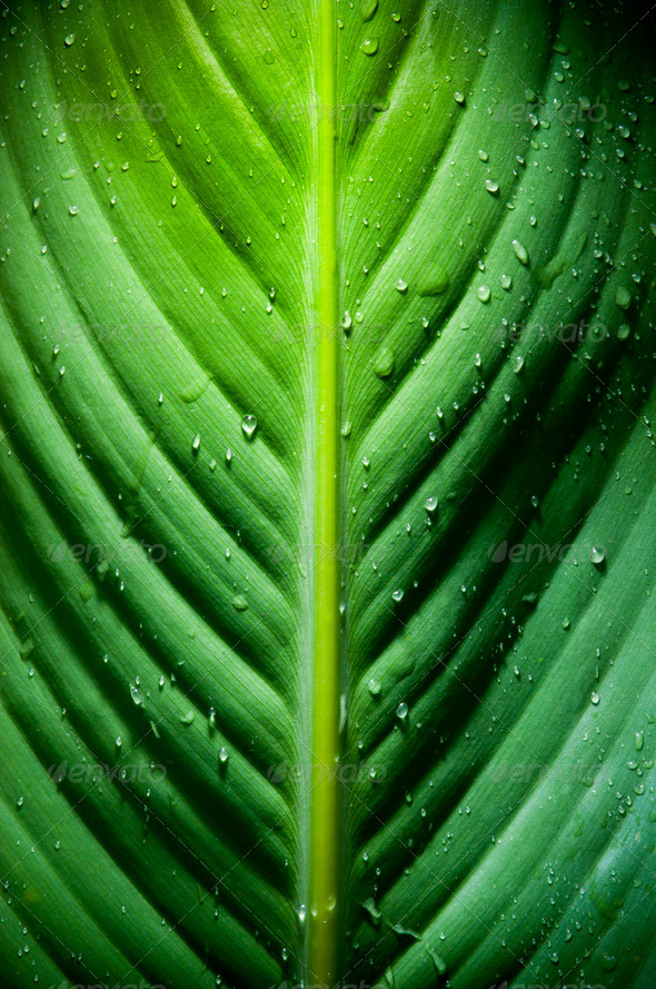 Dramatic Leaf Detail - Stock Photo - Images