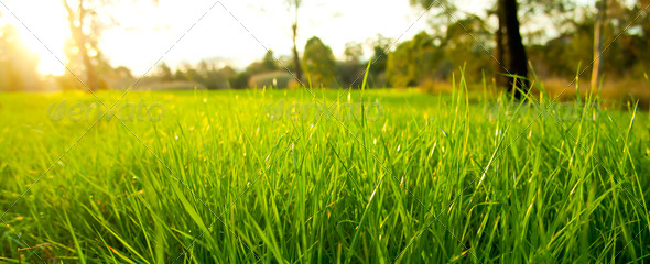 Lush Grass - Stock Photo - Images