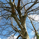 tree branches - PhotoDune Item for Sale
