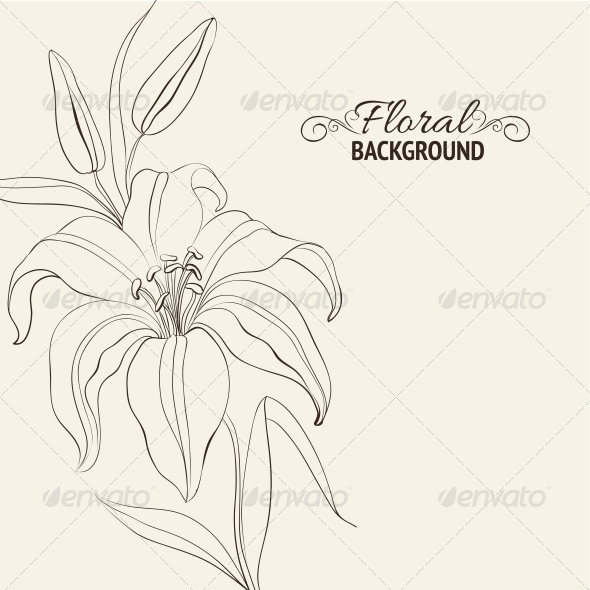 GraphicRiver Lily Flower Isolated Over White 4639526