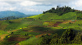 Terraced rice fields - PhotoDune Item for Sale