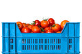 Crate with fresh tomatoes isolated on white - PhotoDune Item for Sale