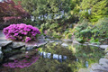 Waterfall at Crystal Springs Rhododendron Garden in Spring - PhotoDune Item for Sale