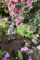 Rhododendron Flowers Blooming Over Waterfall - PhotoDune Item for Sale