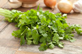 Fresh coriander - PhotoDune Item for Sale