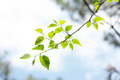 Elm Branch Against the Background of Sky - PhotoDune Item for Sale
