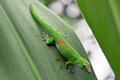 Green gecko - PhotoDune Item for Sale