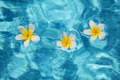 Flower in blue water - PhotoDune Item for Sale