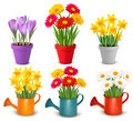 Collection of spring and summer colorful flowers in pots and watering can.  - PhotoDune Item for Sale