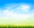Summer gaze background with blue sky and a field of dandelions.  - PhotoDune Item for Sale