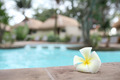 Tropical flowers Swimming pool - PhotoDune Item for Sale