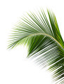 Palm leaf - PhotoDune Item for Sale
