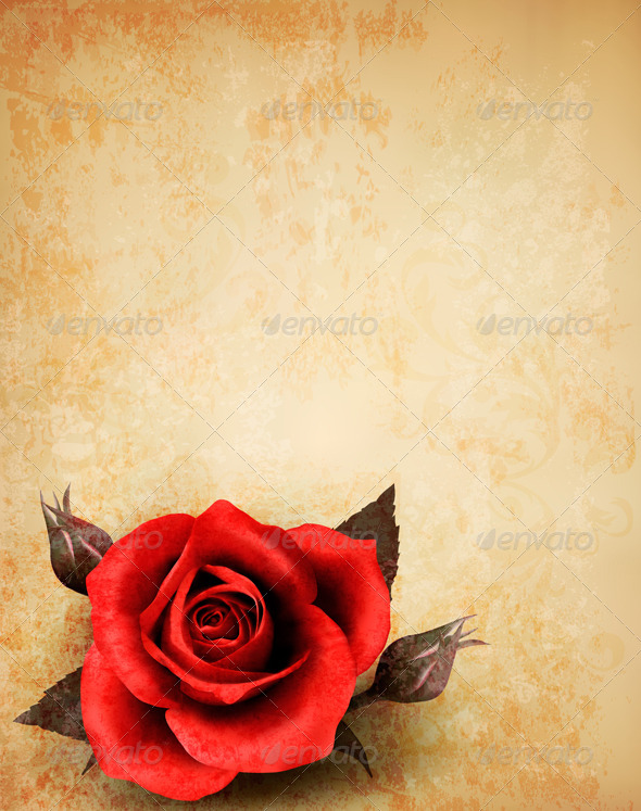 GraphicRiver Big Red Rose on Old Paper Background 4655497
