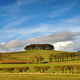 Copse of trees in English Countryside - PhotoDune Item for Sale