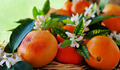 Flowers and Fruit of ripe  Oranges - PhotoDune Item for Sale