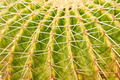 Close-up of a prickly cactus - PhotoDune Item for Sale