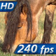 Grazing Horse - VideoHive Item for Sale