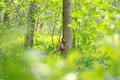 Little Squirrel Sitting on a Tree in the Forest - PhotoDune Item for Sale