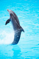 Dolphin show - PhotoDune Item for Sale