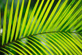 Palm tree leaf close-up - PhotoDune Item for Sale