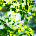 Green leaves background - PhotoDune Item for Sale