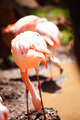 Pink flamingos - PhotoDune Item for Sale