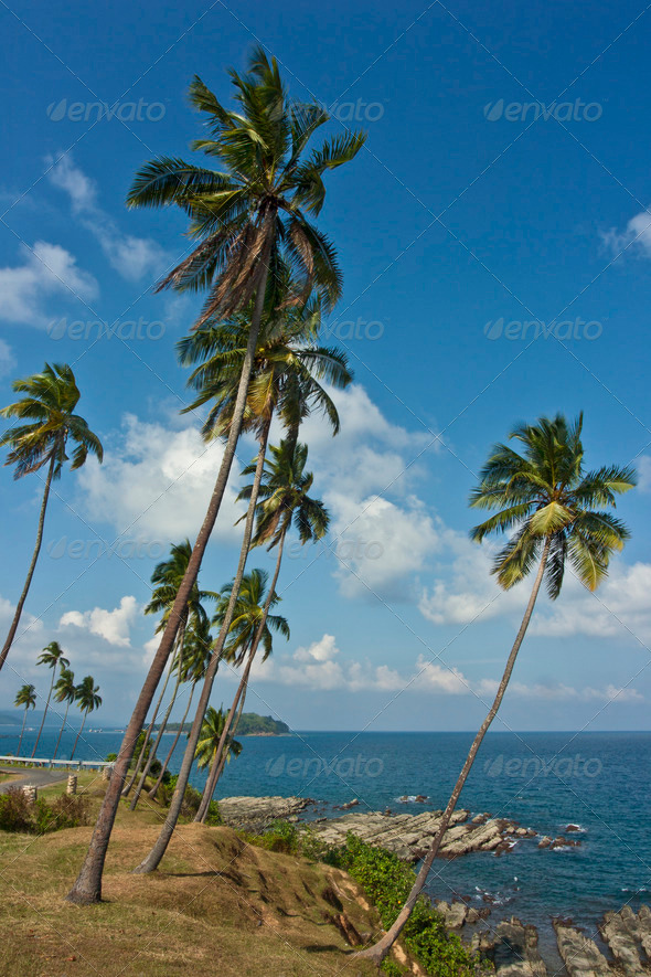 Palms on coast - Stock Photo - Images