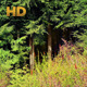 Opening Into Enchanted Forest - VideoHive Item for Sale