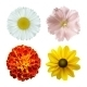 Summer Flowers - GraphicRiver Item for Sale