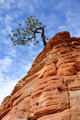 Pine Tree Growing on a Sandstone Formation in Zion - PhotoDune Item for Sale
