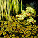 Pond in a lush garden - PhotoDune Item for Sale