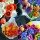 Colorful tulip bouquets - PhotoDune Item for Sale