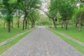 Green alley,path in the park - PhotoDune Item for Sale
