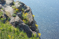 Coastal Cliffs & Aurinia Saxatilis Flowers - PhotoDune Item for Sale