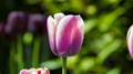 Flowers 42 - PhotoDune Item for Sale