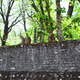 Group of monkeys sitting on the fence - PhotoDune Item for Sale