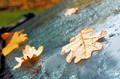 autumn oak leaves and drops of water on the car windscreen - PhotoDune Item for Sale