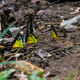 Monarch Butterfly - PhotoDune Item for Sale