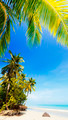 Idyllic tropical beach - PhotoDune Item for Sale