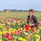 Portrait of a happy woman  plucking flowers in Dutch tulips fiel - PhotoDune Item for Sale