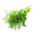 dill isolated - PhotoDune Item for Sale