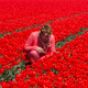 adult woman in red tulip field - PhotoDune Item for Sale