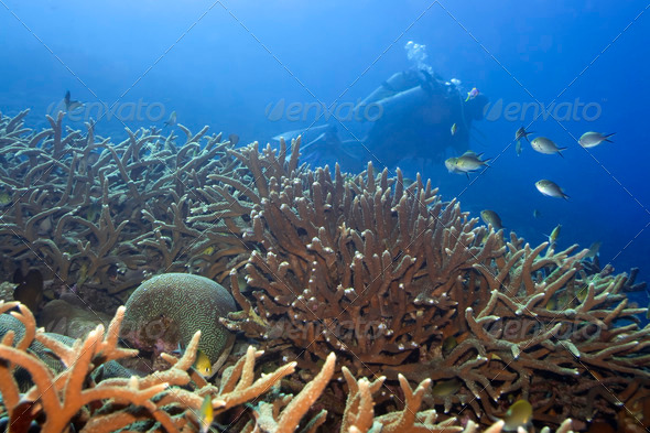 Underwater landscape - Stock Photo - Images