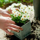 Planting flower - PhotoDune Item for Sale