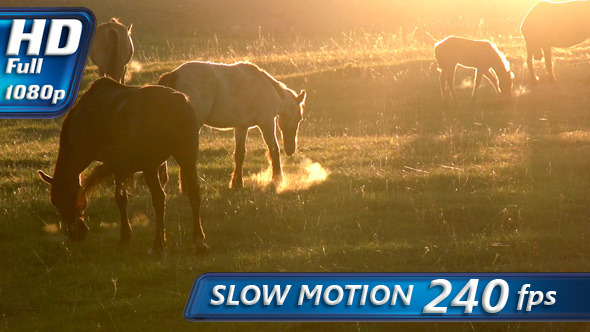 VideoHive Horses in the Early Morning 4710482