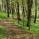 Old Brick Road in the Woods - PhotoDune Item for Sale