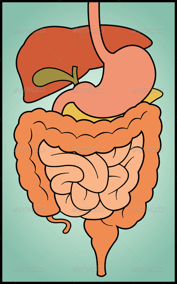 GraphicRiver Digestive System 4712976