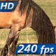 Beautiful Horse - VideoHive Item for Sale